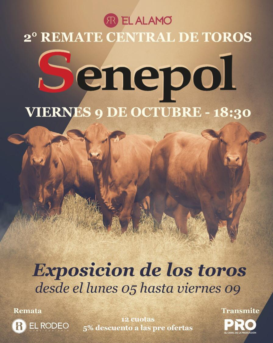 Remate Central de Toros Senepol